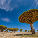 Dream Destination: Socotra