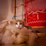 Photo Friday: Moroccan Kitty