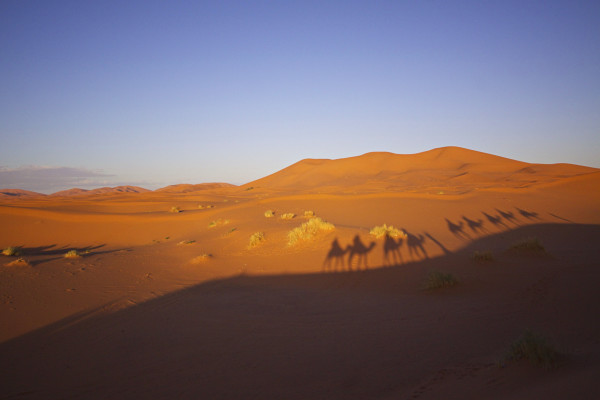 Camel trek shadows in Sahara Desert, Morocco