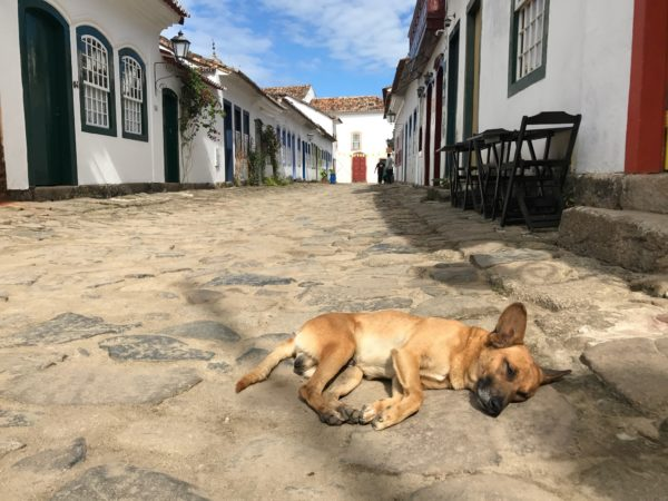 stray dog paraty brazil